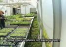 Les Jardins de Marie-Bio, un incubateur agricole bio sur petite surface