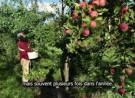 Les Fermes Miracle, un verger commercial de 5 acres inspiré de la permaculture dans le sud du Québec