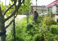 Écomestible, aménagement paysager comestible et permaculture urbaine