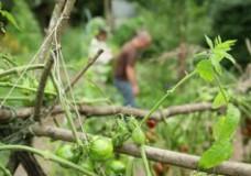 Concevoir son jardin et sa vie avec la permaculture